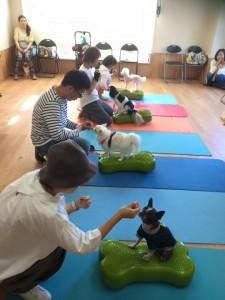 小型犬クラス