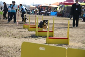 1280-FLYBALL