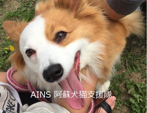 480-AINS阿蘇犬猫支援隊